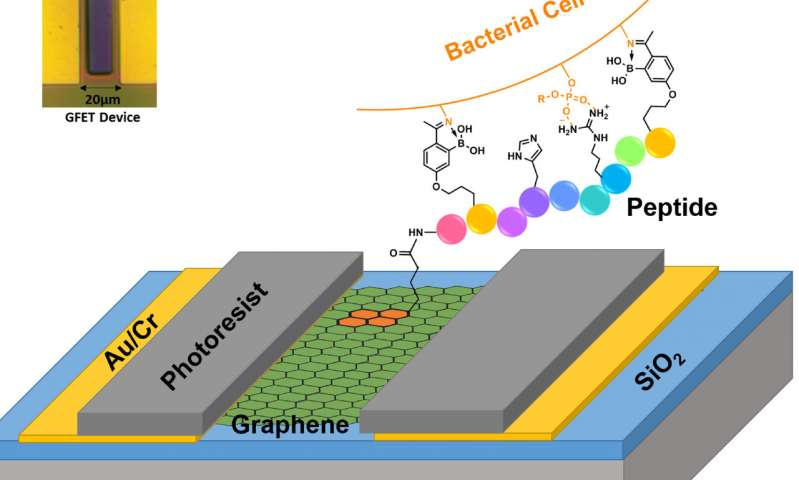 https://nfusion-tech.com/wp-content/uploads/2020/03/graphene-underpins-a-new-platform-to-selectively-identifydeadly-strains-of-bacteria_5e7486ee345fa.jpeg