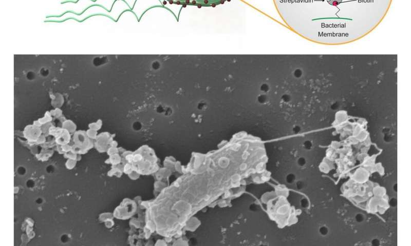 https://nfusion-tech.com/wp-content/uploads/2020/04/personalized-microrobots-swim-through-biological-barriersdeliver-drugs-to-cells_5e8d9197033c8.jpeg