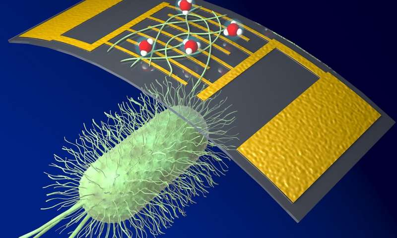 https://nfusion-tech.com/wp-content/uploads/2020/05/a-new-highly-sensitive-chemical-sensor-uses-proteinnanowires_5ebd015176ad3.jpeg