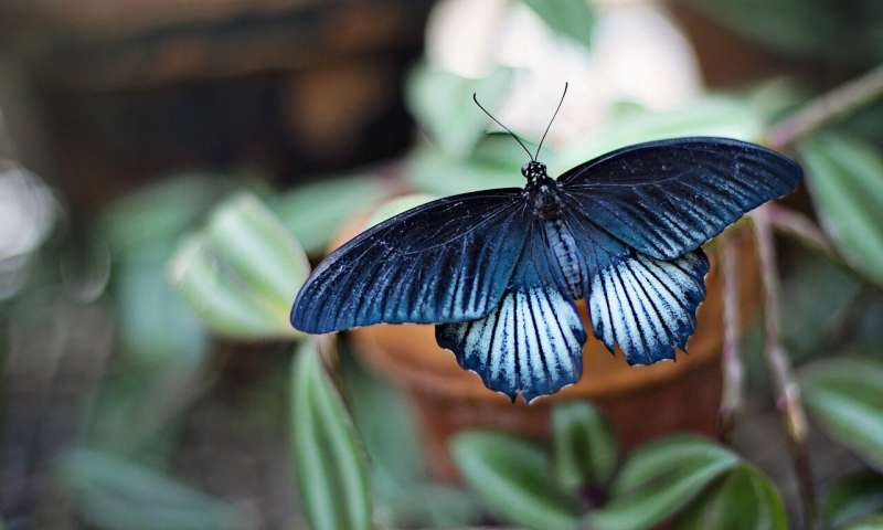 https://nfusion-tech.com/wp-content/uploads/2020/06/butterfly-inspired-nanotech-makes-natural-looking-pictureson-digital-screens_5ed9fe2d65563.jpeg
