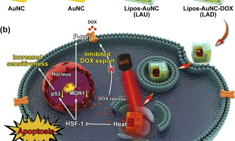 https://nfusion-tech.com/wp-content/uploads/2020/06/researchers-develop-smart-gold-nanocages-to-breakchemoresistance_5ed8acf961fca.jpeg