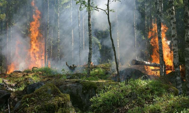 https://nfusion-tech.com/wp-content/uploads/2020/06/self-powered-alarm-fights-forest-fires-monitorsenvironment_5ef45e22dcbb8.jpeg