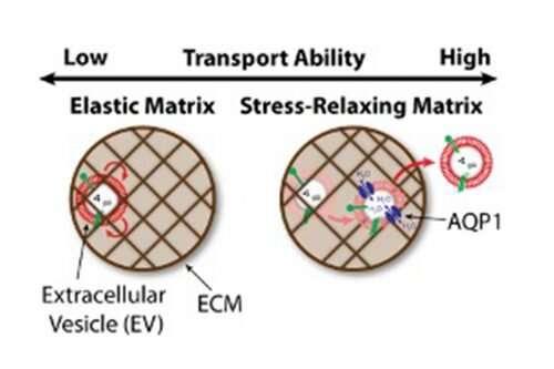 https://nfusion-tech.com/wp-content/uploads/2020/06/study-unveils-new-mechanism-for-long-distance-cellcommunication_5eec7745a995a.jpeg