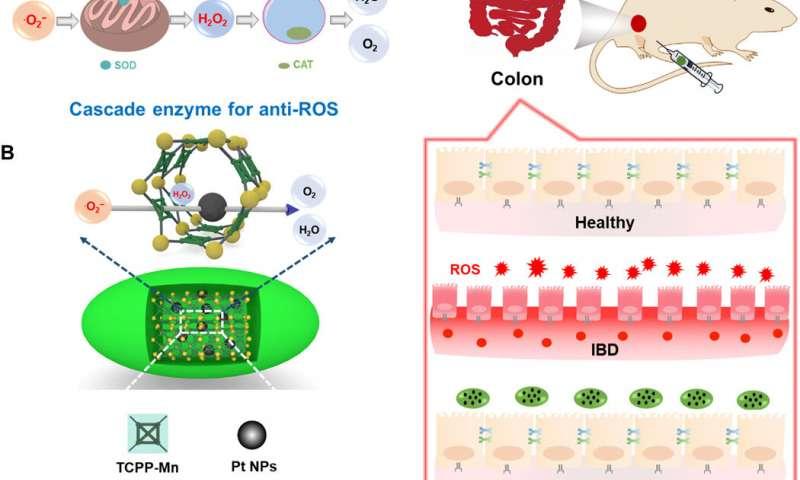 https://nfusion-tech.com/wp-content/uploads/2020/07/designer-nanozymes-for-reactive-oxygen-species-scavenginganti-inflammatory-therapy_5f2008c6709e6.jpeg