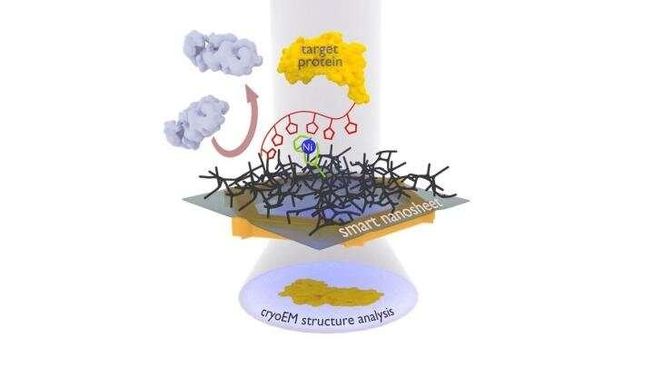 https://nfusion-tech.com/wp-content/uploads/2020/07/how-smart-ultrathin-nanosheets-go-fishing-forproteins_5f16cf62f2c83.jpeg