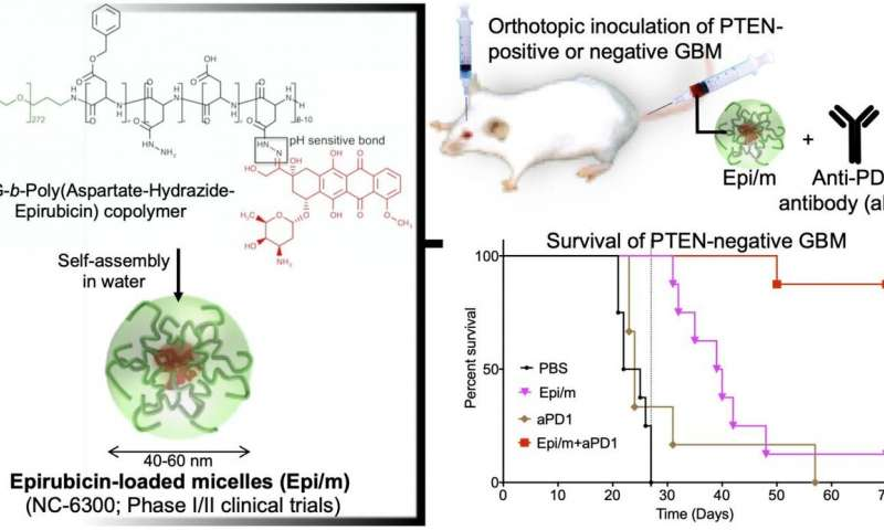 https://nfusion-tech.com/wp-content/uploads/2020/08/epirubicin-loaded-nanomedicines-beat-immune-checkpointblockade-resistance-in-glioblastoma_5f2e63828d29f.jpeg