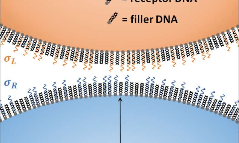 https://nfusion-tech.com/wp-content/uploads/2020/08/velcro-method-for-more-precise-binding-of-drugparticles_5f44cf1cdda9e.jpeg