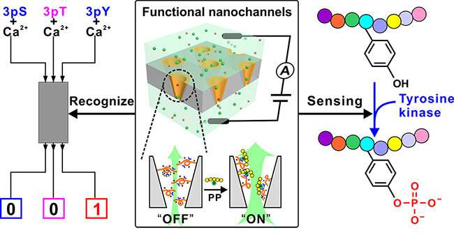 https://nfusion-tech.com/wp-content/uploads/2020/09/functional-ion-nanochannel-based-approach-to-detect-tyrosinephosphorylation_5f64844378f38.jpeg