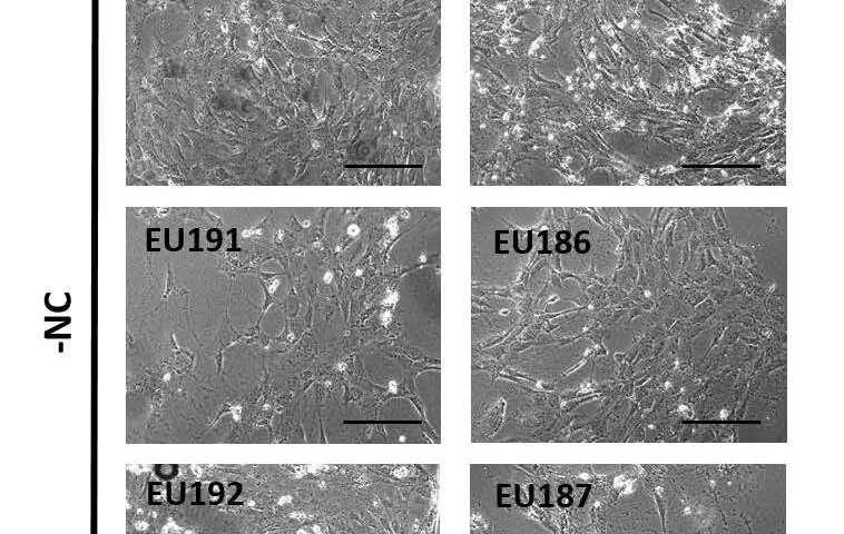 https://nfusion-tech.com/wp-content/uploads/2020/09/nano-particles-for-healthy-tissue_5f53626644d86.jpeg
