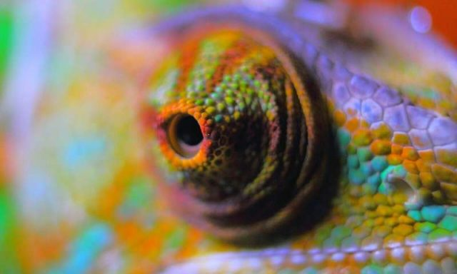 A flexible color-changing film inspired by chameleon skin