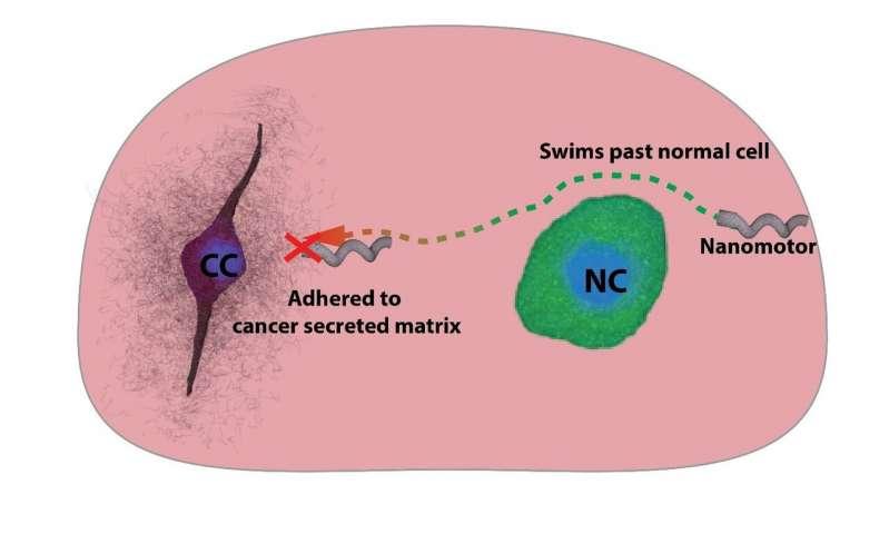https://nfusion-tech.com/wp-content/uploads/2020/10/nanomotors-as-probes-to-sense-cancer-environment_5f75ab29827cc.jpeg