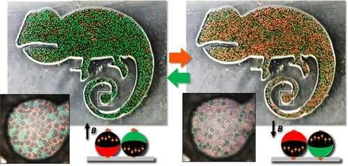 https://nfusion-tech.com/wp-content/uploads/2020/12/colorful-magnetic-janus-balls-could-help-foilcounterfeiters_5fdb29d61ab7e.jpeg