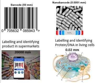 https://nfusion-tech.com/wp-content/uploads/2020/12/nanoscopic-barcodes-set-a-new-science-limit_5fc6127756cd3.jpeg