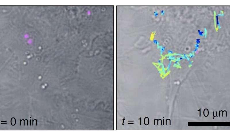https://nfusion-tech.com/wp-content/uploads/2020/12/raman-holography-for-biology_5fc61254e0ba8.jpeg