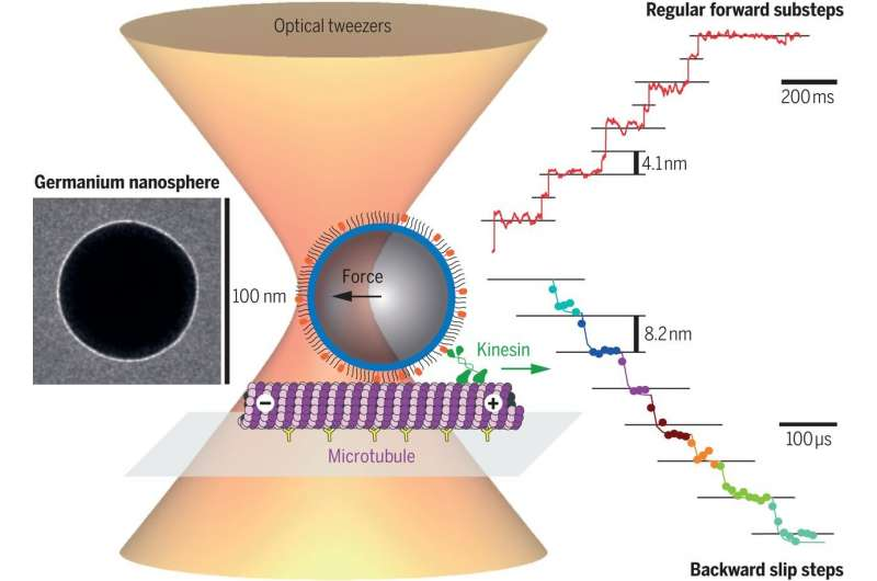 https://nfusion-tech.com/wp-content/uploads/2021/02/nanospheres-measure-the-forces-of-cell-motors_6027a0e412789.jpeg