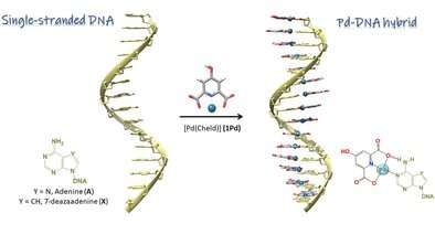 https://nfusion-tech.com/wp-content/uploads/2021/03/single-stranded-dna-as-supramolecular-template-for-highlyorganized-palladium-nanowires_605f001f0e1f9.jpeg