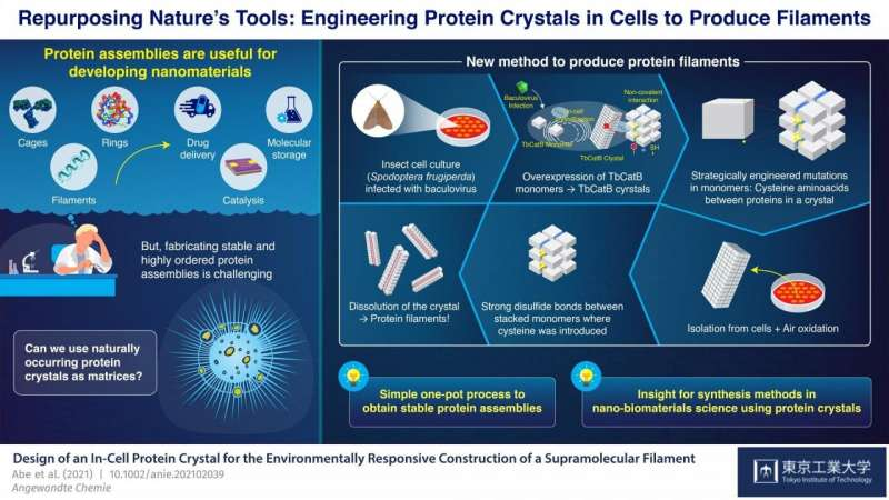 https://nfusion-tech.com/wp-content/uploads/2021/04/in-cell-nano-3d-printer-synthesizing-stable-filaments-fromin-cell-protein-crystals_6087def74823b.jpeg