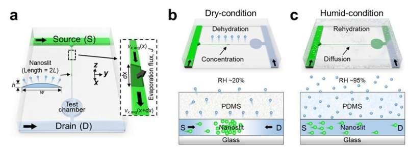 https://nfusion-tech.com/wp-content/uploads/2021/05/new-study-presents-evaporation-driven-transport-control-ofsmall-molecules-along-nanoslits_60a78840e6b7f.jpeg