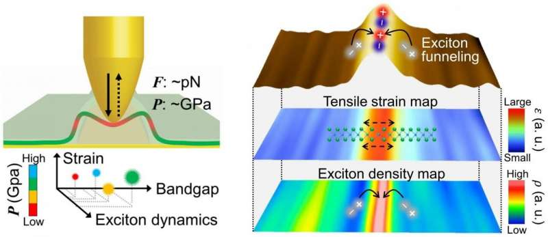 https://nfusion-tech.com/wp-content/uploads/2021/06/new-study-presents-tip-induced-nano-engineering-of-strainbandgap-and-exciton-funneling-in-2d-semiconductors_60c1e070e8cdf.jpeg