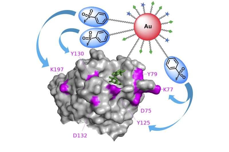 https://nfusion-tech.com/wp-content/uploads/2021/07/researchers-use-multivalent-gold-nanoparticles-to-developefficient-molecular-probe_60e6ca75afbb3.jpeg