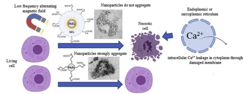 https://nfusion-tech.com/wp-content/uploads/2021/08/non-magnetic-shell-coating-of-magnetic-nanoparticles-as-keyfactor-for-cytotoxicity_6128b5a60c4e9.jpeg