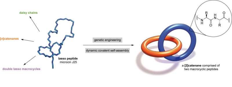 https://nfusion-tech.com/wp-content/uploads/2021/08/researchers-invent-worlds-smallest-biomechanicallinkage_6124c1020f229.jpeg