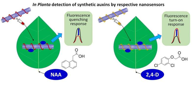 https://nfusion-tech.com/wp-content/uploads/2021/09/nanosensors-designed-to-detect-plant-hormones_6131ef95ac2d8.jpeg