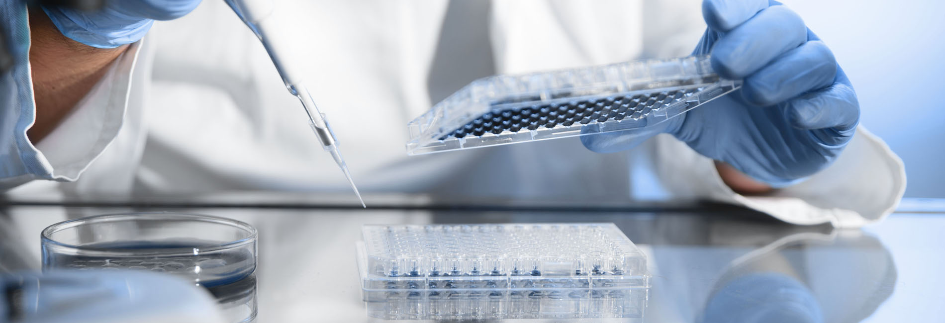 Scientist transferring liquid into microwell plates using a pipette